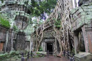 Ta Prohm temple (Medium)